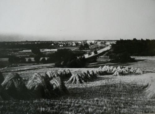 Laukas, Utenėlė ir Zagino muilo gamykla15